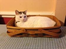 Cat in a Basket 2